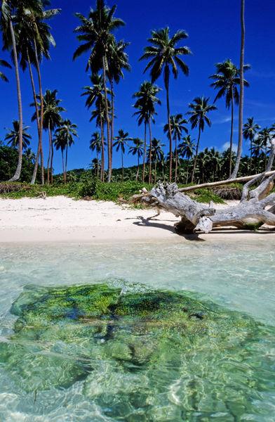 Rm-beach-palm-trees-tropical-vanuatu-vt076