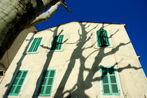 Plane tree (Platanus) casting shadows on a quaint building on Boulevard Eugene Pierre von Sami Sarkis Photography