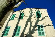 Rf-building-facade-marseille-shadows-shutters-trees-mle372