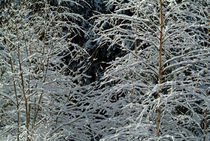 Bare tree branches covered in snow by Sami Sarkis Photography