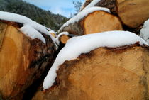 Pile of chopped logs covered in snow von Sami Sarkis Photography