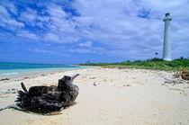 Bird sitting on the white sand beach looking toward the lighthouse von Sami Sarkis Photography