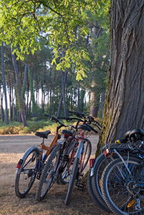 Parked mountain bikes leaning against a tree trunk. by Sami Sarkis Photography