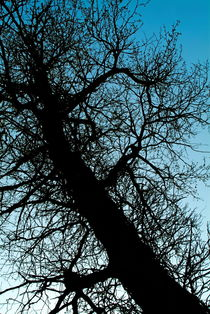 Silhouette of a bare tree trunk and branches in winter. by Sami Sarkis Photography