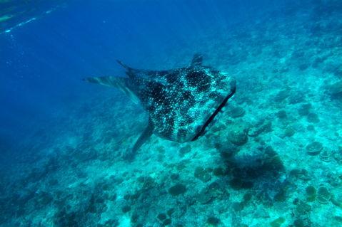 Rf-reef-sea-underwater-whale-shark-uwmld0102