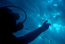 A scuba diver pointing the sunbeams penetrating the water's surface. von Sami Sarkis Photography