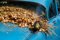 Classic American car with trailer full of garlic for sale in Vinales von Sami Sarkis Photography
