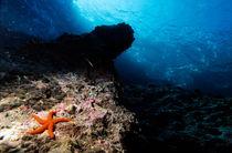 Red starfish on a rock underwater von Sami Sarkis Photography