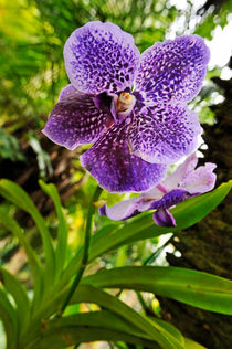 Purple and White Orchids in garden by Sami Sarkis Photography