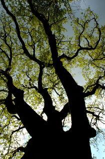 Rf-change-growth-silhouette-spring-tree-var944