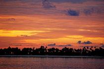 Rf-beauty-idyllic-island-maldives-palms-silhouette-mld0030