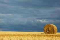Rm-bale-farm-field-france-harvested-hay-bale-fra725