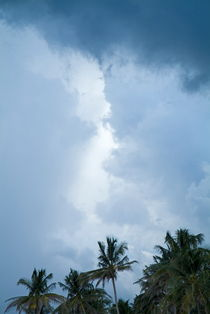 Coconut trees against the backdrop of a stormy sky by Sami Sarkis Photography