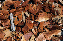 Chips of wood (close-up) by Sami Sarkis Photography