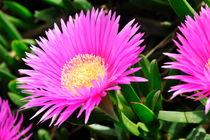 Pink flowers von Sami Sarkis Photography