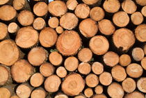 Stack of wooden logs in the Landes forest von Sami Sarkis Photography