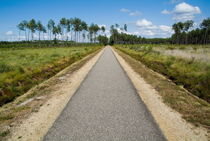Bicycle track passing through the Landes forest by Sami Sarkis Photography