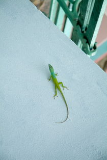 Rf-bright-lizard-wall-wildlife-cub1037