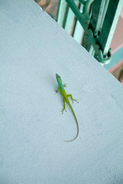 Rf-bright-lizard-wall-wildlife-cub1037