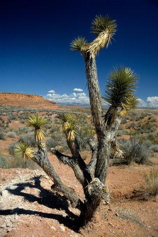 Rf-arid-bryce-canyon-national-park-tree-usa022