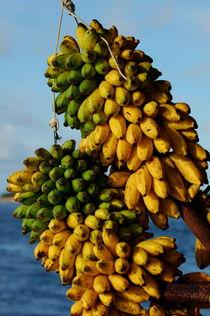 Bunches of bananas by Sami Sarkis Photography