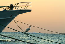 Heron on boat rope at sunrise on the Red Sea von Sami Sarkis Photography