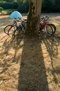 Bicycles leaning against a tree trunk with tent in background. by Sami Sarkis Photography