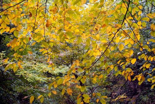 Rf-autumn-france-leaves-transforming-var376