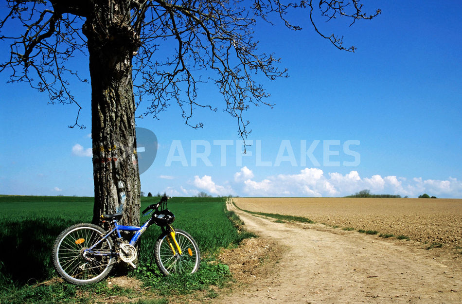 mountain bike under a tree beside dirt road photography art prints and posters by sami sarkis. Black Bedroom Furniture Sets. Home Design Ideas