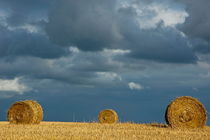 Rf-bales-farf-field-france-harvested-hay-bales-fra743