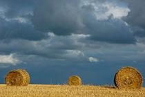 Rf-bales-farf-field-france-harvested-hay-bales-fra743