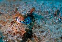 Rf-camouflage-eyes-fish-underwater-uw484
