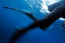 Rf-blurry-diver-legs-marseille-swimfins-underwater-uw300