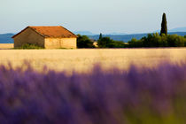 Farmhouse in a harvested wheat field surrounded by lavender fields at summer by Sami Sarkis Photography