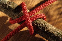 Clove hitch knot on walnut branch von Sami Sarkis Photography