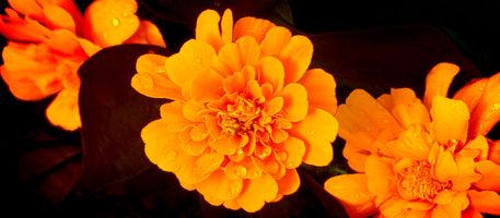 Orange-beauty
