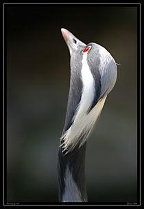 Wildlife-00018