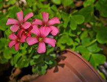 Tiny flowers von Florentina Necunoscutu de Carvalho