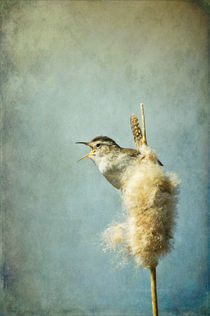 Marsh Wren by Barbara Magnuson & Larry Kimball