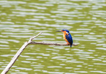 Kingfisher in Madagascar von Graham Prentice