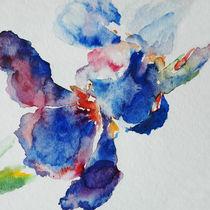Blue iris 2 von Katia Boitsova-Hošek