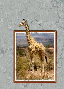Giraffe by Graham Prentice