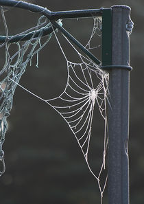 Spider's web in frost von Graham Prentice