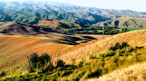 Summertime Central Otago New Zealand by Kevin W.  Smith