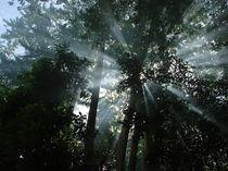 SUN SHOWER by UMAED JOSEPH
