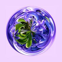 Bluebell sphere by Robert Gipson