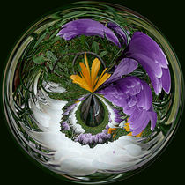 'Sphere of crocus' by Robert Gipson