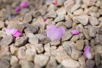 Heart shaped rose petal on gravel by kbhsphoto