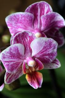 'orchid' by Falko Follert Kunst Poster Shop
