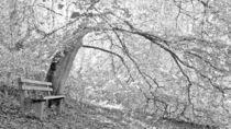 Die Bank im Wald von Waldemar Moll